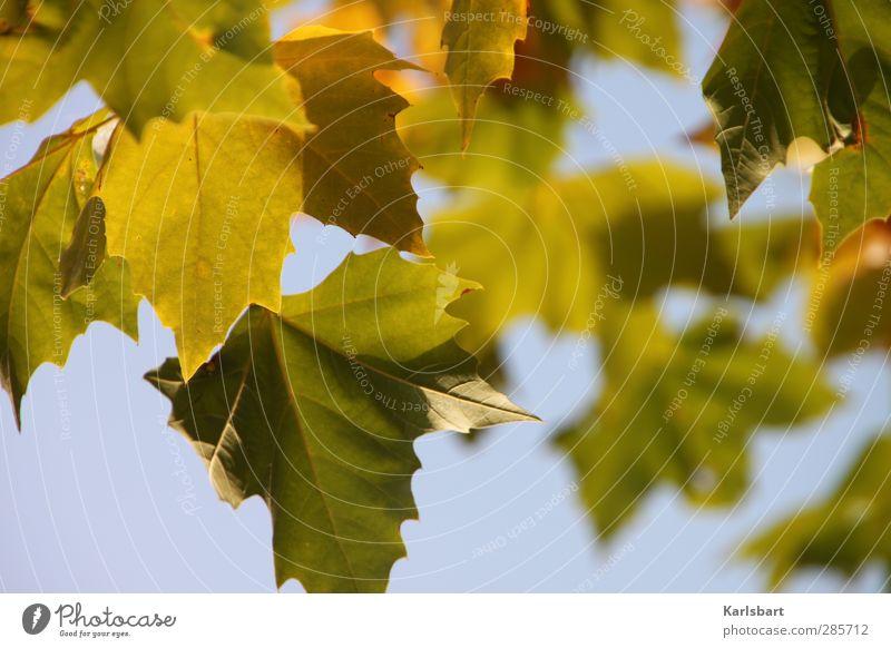 Tarn. Himmel Natur Sommer Pflanze Baum Blatt Erholung Wald Umwelt Herbst Bewegung Frühling Garten Gesundheit Park Wetter