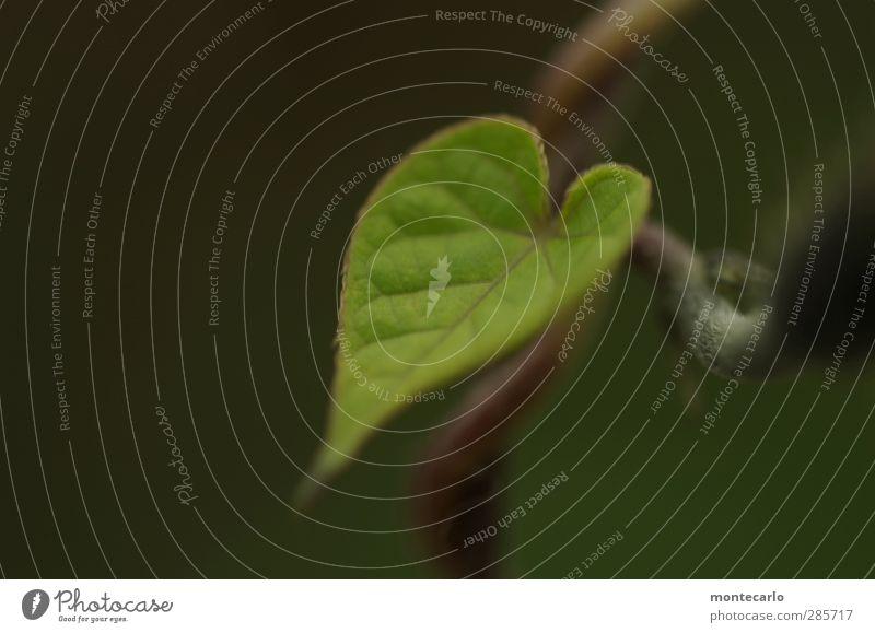 Blatt Natur grün Pflanze Umwelt klein Stimmung natürlich authentisch frisch Spitze dünn Grünpflanze Wildpflanze