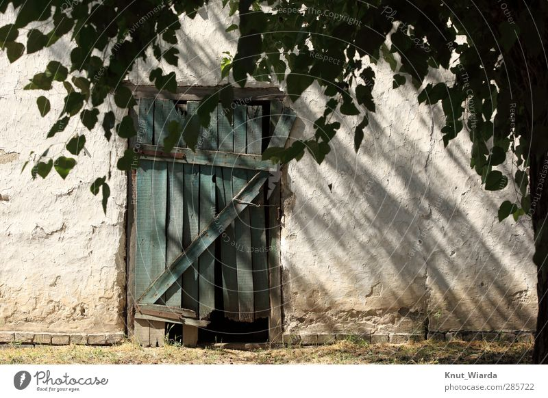 Idyllisch Baum Dorf Gebäude Fassade Tür alt kaputt grün weiß Verfall Vergänglichkeit Scheune Bauernhof Idylle Farbfoto Außenaufnahme Menschenleer Tag Licht