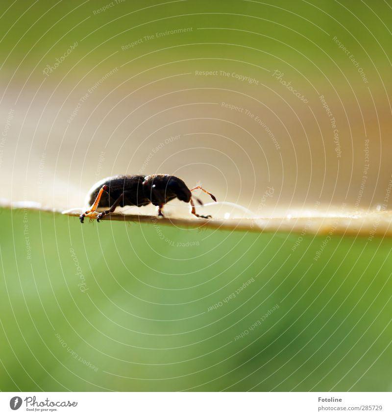 Auf Blattes Kante Natur grün Pflanze Blatt Tier schwarz Umwelt Herbst klein hell Beine natürlich nah Insekt Käfer krabbeln
