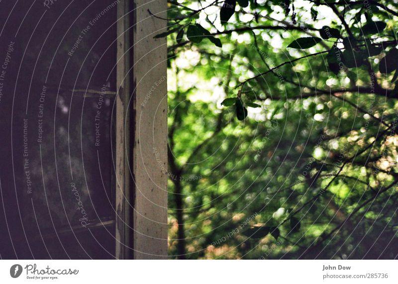 Permeabelität grün Pflanze Baum Haus Fenster Luft offen wild Wachstum Sträucher Ast Zweig Öffnung bewachsen grünen Tauschen