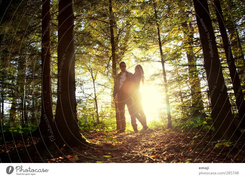 WE maskulin feminin Junge Frau Jugendliche Junger Mann Paar 2 Mensch 18-30 Jahre Erwachsene Umwelt Natur Herbst Wald natürlich gold grün Liebespaar Farbfoto
