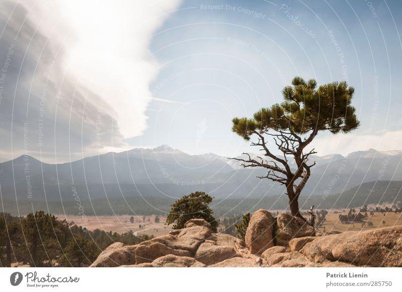 If trees could talk Umwelt Natur Landschaft Pflanze Urelemente Luft Himmel Wolken Sonnenlicht Klima Klimawandel Wetter Schönes Wetter Baum Wald Felsen