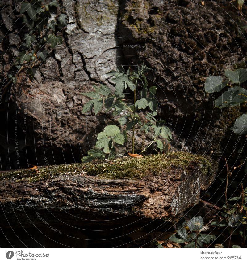 die Stille - harmonisch Wohlgefühl Zufriedenheit Sinnesorgane Erholung ruhig Meditation Duft Sommer Sonne Schönes Wetter Baum Efeu Farn Wildpflanze Park Wald