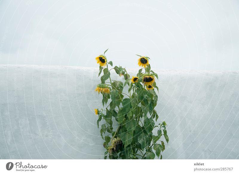 Himmel schön grün Wasser Einsamkeit Blume Blatt gelb kalt feminin Traurigkeit Blüte grau natürlich Regen Feld