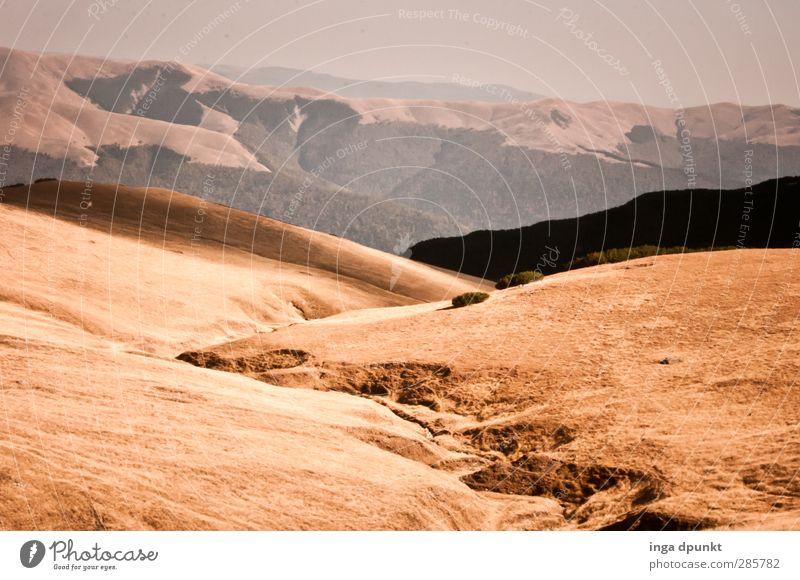 der Wanderweg ist das Ziel Umwelt Natur Landschaft Pflanze Urelemente Erde Wetter Schönes Wetter Sträucher Berge u. Gebirge Rumänien Karpaten Siebenbürgen