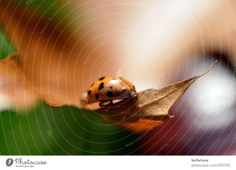 Verschwinden in der Unschärfe Umwelt Natur Pflanze Tier Sonnenlicht Wetter Schönes Wetter Gras Blatt Garten Park Wiese Wildtier Käfer 1 krabbeln sitzen