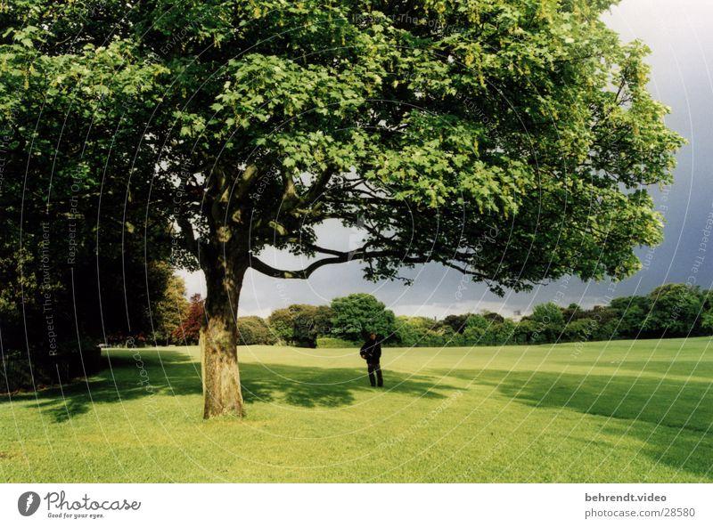 Stadtpark in Dublin Park grün Baum Wiese frisch Leben Republik Irland Rasen Natur