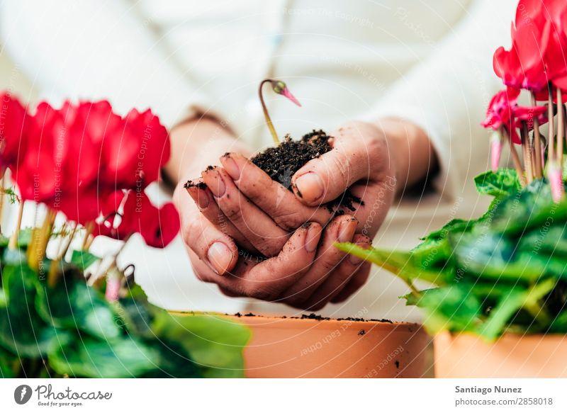 Frauenhände transplantieren Pflanze. heimwärts Born nachhaltig Leben Sau Aussaat