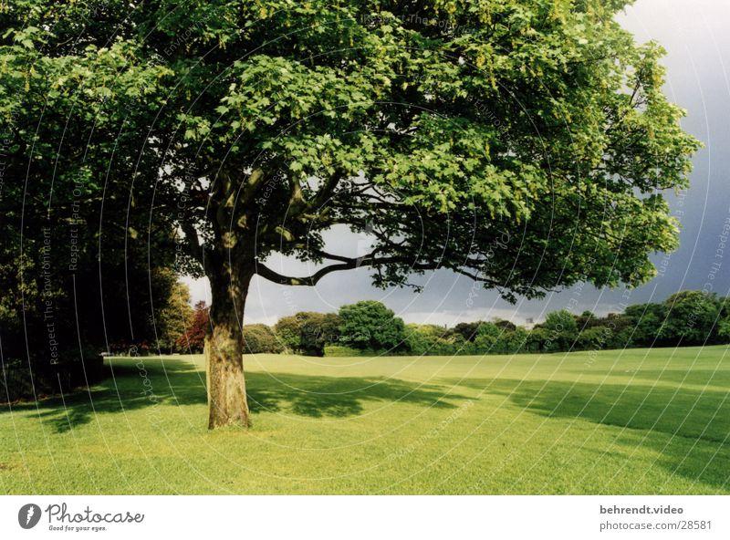 Stadtpark in Dublin (2) Natur Baum grün Leben Wiese Park frisch Rasen Republik Irland