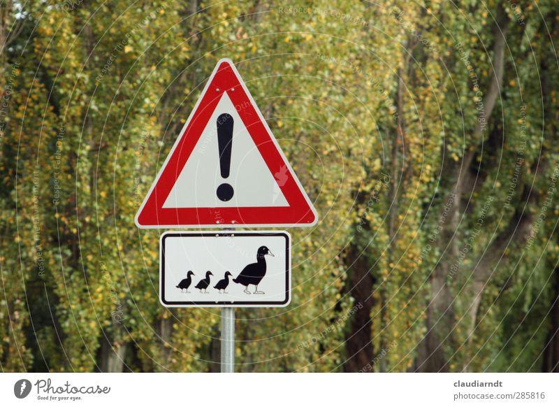 Entenhausen Baum Straßenverkehr Verkehrszeichen Verkehrsschild Entenfamilie 4 Tier Tiergruppe Tierjunges Tierfamilie Schilder & Markierungen Hinweisschild