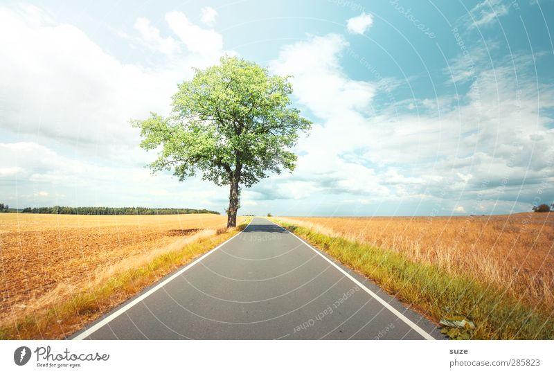 Sommerzeit Umwelt Natur Landschaft Pflanze Himmel Wolken Horizont Herbst Wetter Schönes Wetter Baum Wiese Feld Verkehr Verkehrswege Straße Wege & Pfade