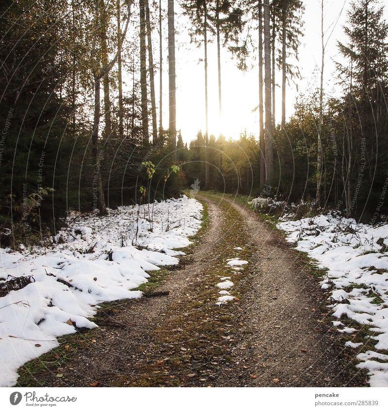 wegbeschreibung Natur Baum Winter Landschaft Wald Herbst Schnee Wege & Pfade Stimmung Romantik Mut Lichteinfall Wegbiegung Beschreibung Fichtenwald