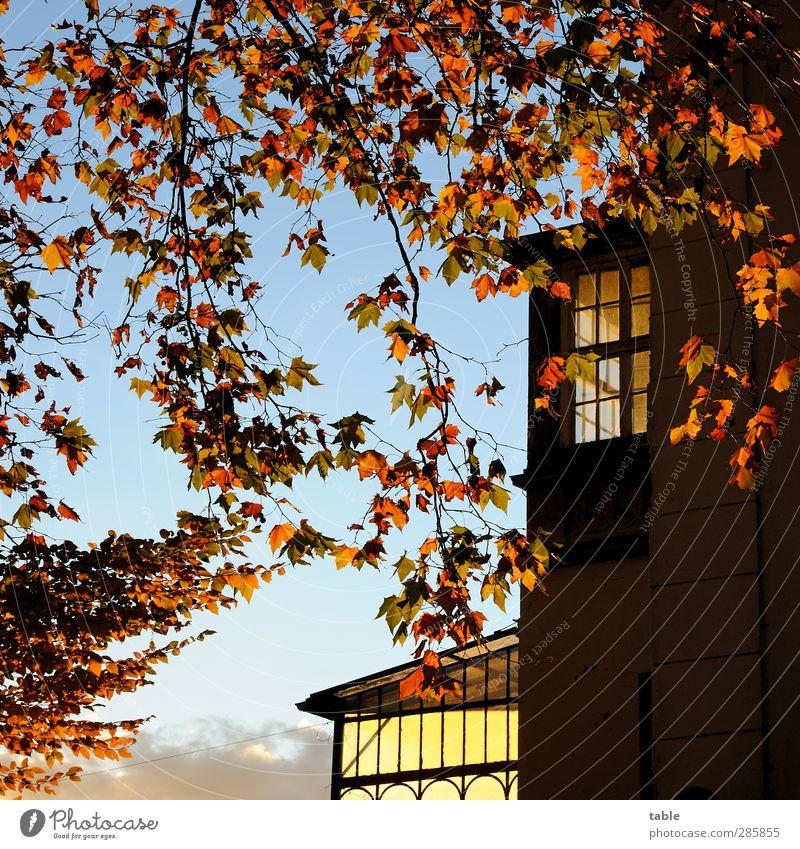 voll krass romantisch . . . Himmel Natur blau alt Pflanze Baum rot Landschaft schwarz Haus Umwelt Fenster dunkel Herbst Gefühle Berlin