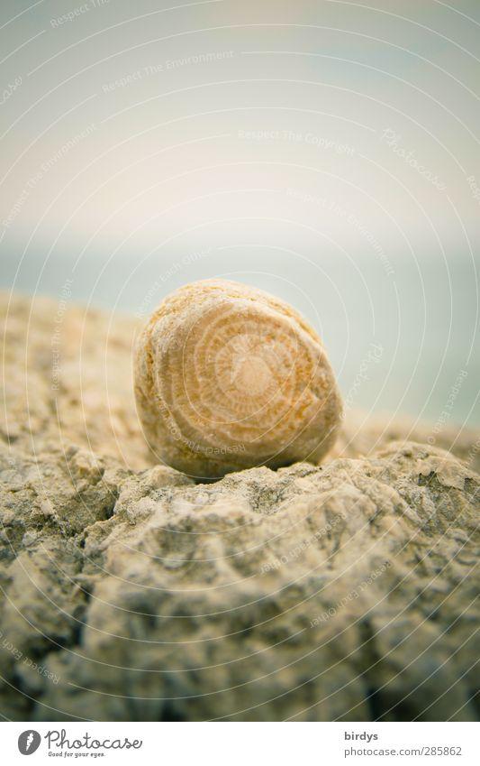 kleiner Findling Natur blau schön Sommer Küste Stein hell Felsen natürlich ästhetisch rund positiv Strandgut Sammlerstück Fossilien