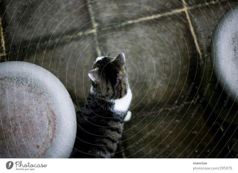 Wo ist die Maus? Katze Natur Tier oben niedlich Neugier Fell Haustier klug Ausdauer Tierliebe listig