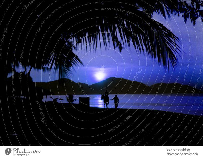 Mondschein am Strand von Penang (Malaysia) Wasser Meer blau Berge u. Gebirge Pferd Insel Palme Reiter
