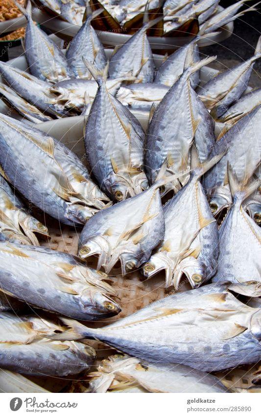 trockenfisch blau Ferien & Urlaub & Reisen Tier Umwelt Tod Essen Gesundheit braun natürlich Lebensmittel frisch Tiergruppe Ernährung kaufen Fisch