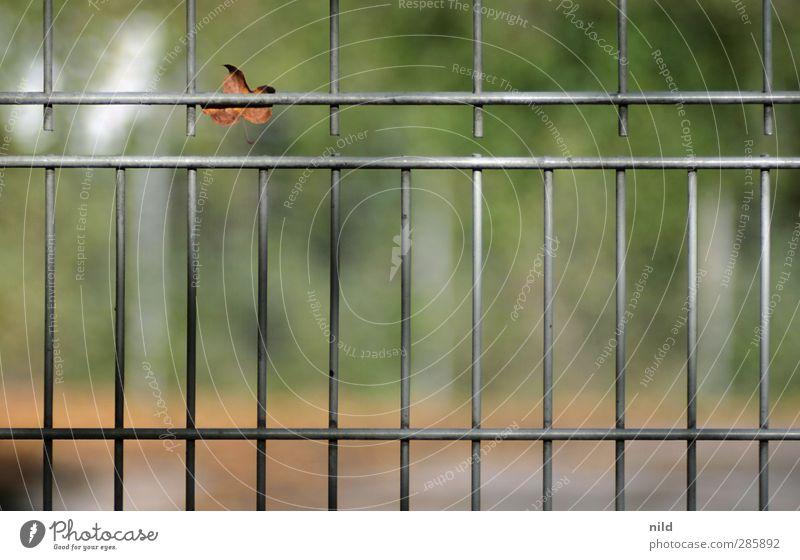 vergitterte herbstliche unschärfe Natur Landschaft Herbst Schönes Wetter Park Blatt Gitter Zaun Sportplatz Metall einzeln Ausgrenzung einsperren Farbfoto