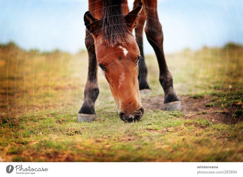 Rila Bergpferd Pferd 1 Tier Ehre Tapferkeit Kraft Macht Mut Tatkraft Akzeptanz loyal Freundschaft schön Freiheit Farbfoto mehrfarbig Tag Starke Tiefenschärfe