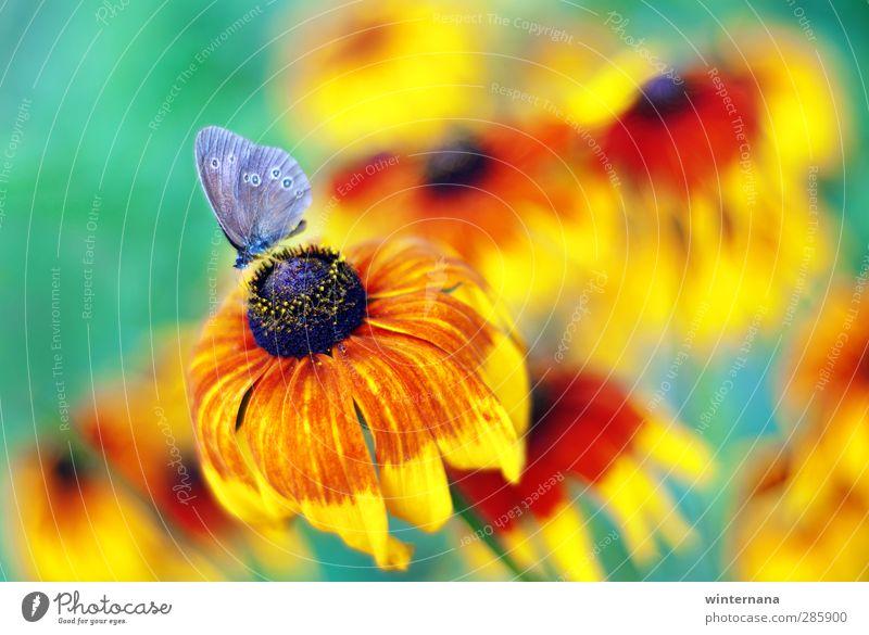 Schmetterling Natur Sommer Blume einzigartig elegant Energie entdecken Ewigkeit exotisch Farbe Freude Farbfoto Außenaufnahme Tag Starke Tiefenschärfe