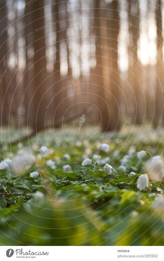 Maiglöckchen Natur Sommer Landschaft Wald Umwelt Blüte Gartenarbeit Grünpflanze Frühlingsgefühle Wildpflanze
