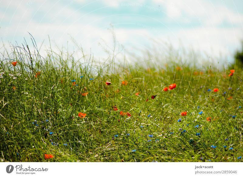 Gras wächst nicht schneller, wenn man daran zieht Himmel Wolken Sommer Schönes Wetter Blume Wiese Müritz Wachstum authentisch frisch schön positiv grün Stimmung
