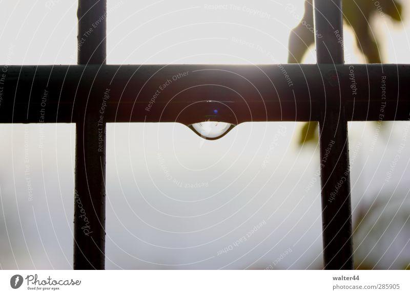 Nach dem Regen Wassertropfen Himmel Gewitterwolken Sonne schlechtes Wetter Nebel Blatt Wildpflanze Metall Linie Tropfen stagnierend Stimmung Zaun Stab Eisen