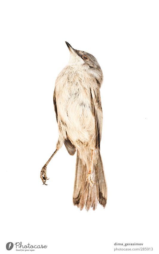 Vogel Tier Wildtier 1 Traurigkeit Krankheit mehrfarbig gelb grau Angst Todesangst Stress Natur Schmerz Wandel & Veränderung Wellness Farbfoto Außenaufnahme Tag
