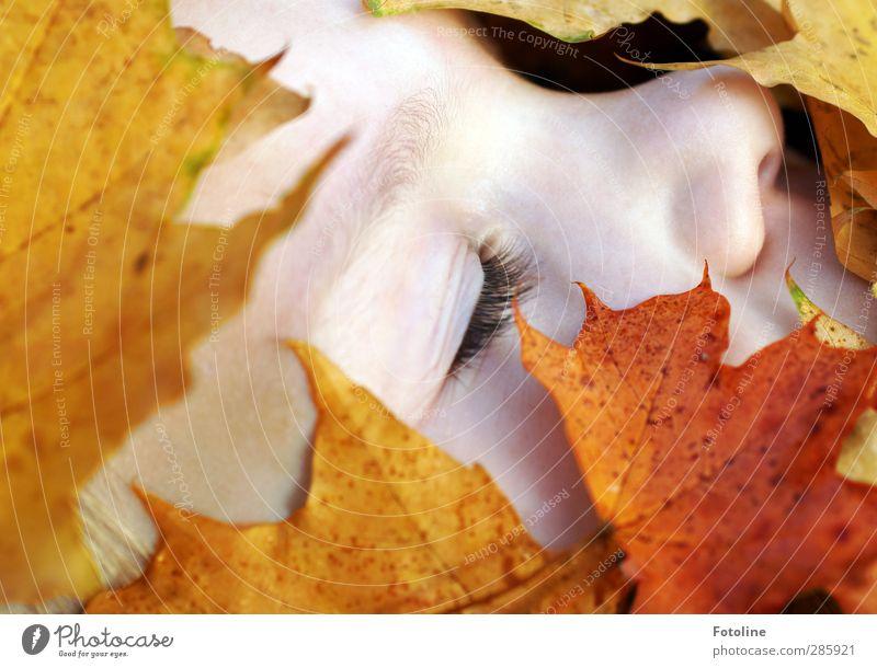 Herbstschlaf ;-) Mensch feminin Kind Mädchen Kindheit Haut Kopf Gesicht Auge Nase Umwelt Natur Pflanze Blatt hell nah natürlich gelb orange rot Wimpern