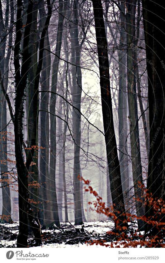 versteckt hinter dem Licht Natur Baum Landschaft Blatt ruhig Winter Wald kalt Umwelt Schnee Nebel geheimnisvoll verstecken Versteck Laubbaum laublos