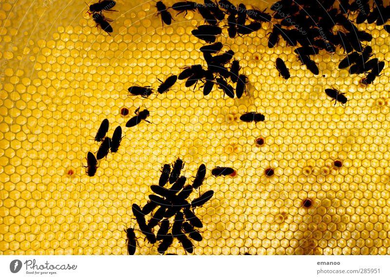 Maja's Kinderstube Natur Tier gelb Wiese Garten Arbeit & Erwerbstätigkeit Feld gold Lebensmittel Ernährung Flügel süß Zusammenhalt Insekt Biene krabbeln