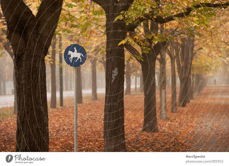 """""""A horse, a horse, my kingdom for a horse..."""" Mensch Frau Jugendliche Baum Einsamkeit Blatt Erwachsene gelb Herbst feminin Wege & Pfade 18-30 Jahre Stimmung"""