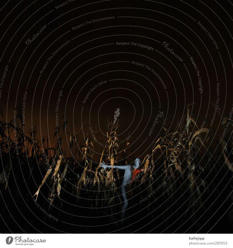 pop im popcornfeld Mensch Natur Mann Pflanze Tier ruhig Landschaft Erwachsene Umwelt Beleuchtung Körper Feld Haut maskulin stehen Landwirtschaft
