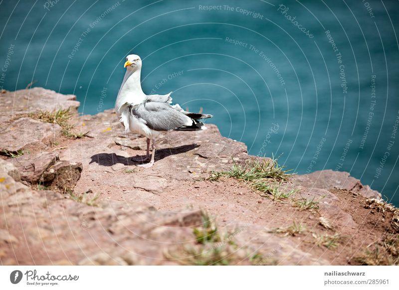 Möwe Umwelt Natur Landschaft Wasser Sommer Küste Meer Atlantik Bretagne Tier Wildtier Vogel 1 stehen Farbfoto Außenaufnahme Menschenleer Tag