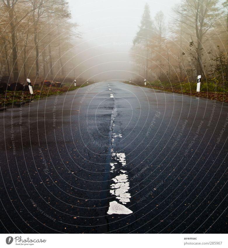 Der Lack ist ab schlechtes Wetter Nebel Regen Baum Wald Straße Unendlichkeit kalt grau Stimmung Zukunft Farbfoto Gedeckte Farben Außenaufnahme Menschenleer