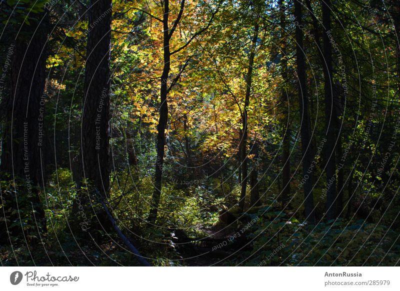 Natur schön Sommer Pflanze Baum Landschaft Wald Umwelt Herbst Gefühle Gras Stimmung Erde Schönes Wetter