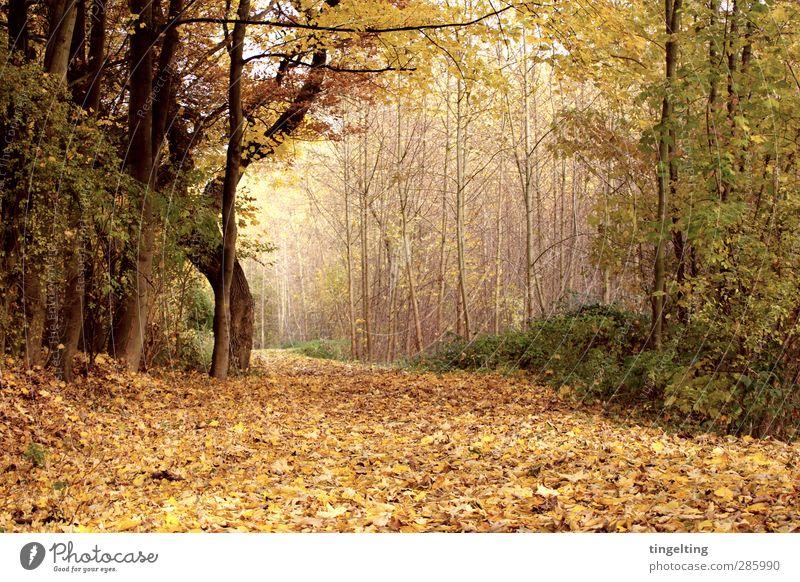 golden Natur Landschaft Erde Herbst Baum Blatt Park Wald verblüht dehydrieren braun gelb grün Spaziergang Sträucher Baumstamm Ast Fußweg Farbfoto Außenaufnahme