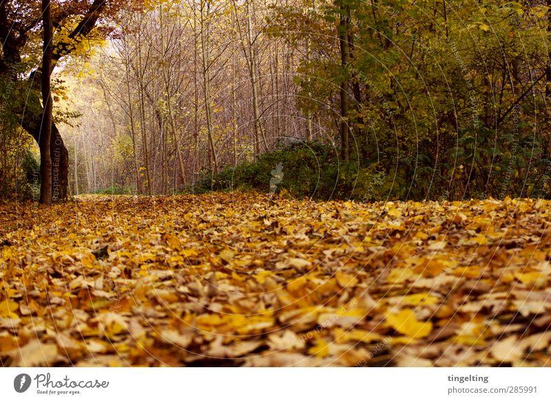 golden II Natur Landschaft Erde Herbst Baum Sträucher Blatt Park Wald verblüht dehydrieren braun gelb grün Fußweg Baumstamm Ast Spaziergang Farbfoto