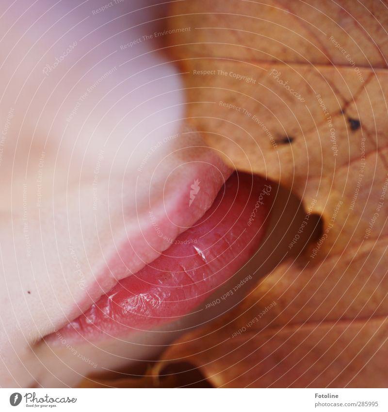 Geschmackvolle Herbstfarben Mensch feminin Mädchen Kindheit Haut Gesicht Nase Mund Lippen Umwelt Natur Pflanze Blatt hell nah natürlich braun rosa herbstlich