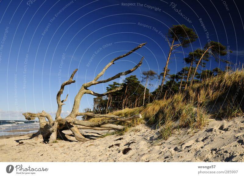 Westküste Himmel Natur blau Baum Strand ruhig Landschaft Erholung Herbst Küste Horizont braun fantastisch Ostsee entdecken Wolkenloser Himmel