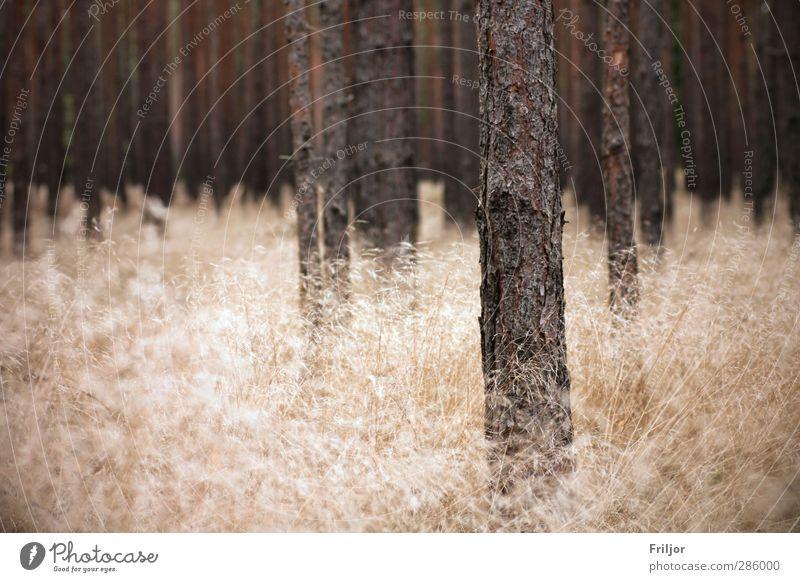 Wolkenwald II Natur Baum Landschaft Wald Herbst Gras Erde ästhetisch Unendlichkeit Wildpflanze