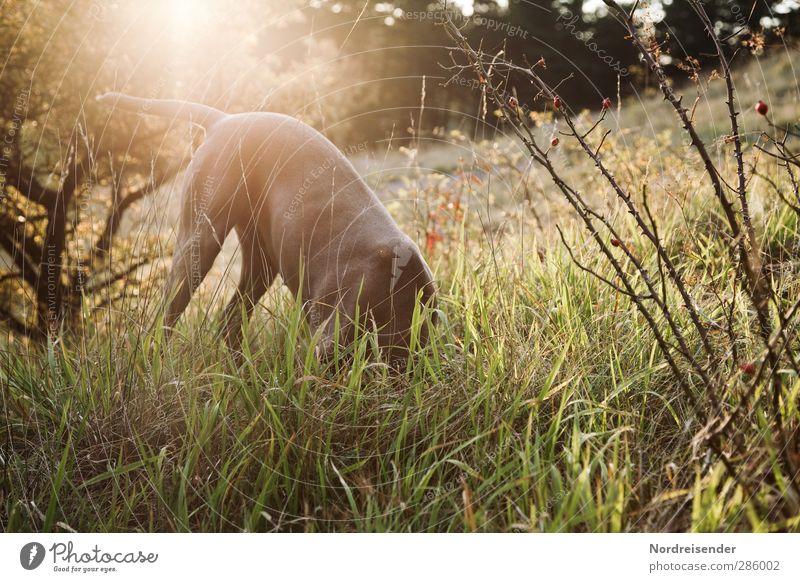 Mäuse gucken.... Hund Natur Sommer Pflanze Freude Tier Wald Wiese Herbst Gras Spielen natürlich frei frisch stehen Schönes Wetter