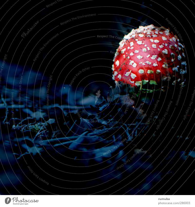Pilzgericht Gesunde Ernährung Natur Wald leuchten bedrohlich rot schwarz weiß gefährlich Kriminalroman Fliegenpilz Pilzhut geheimnisvoll dunkel anleuchten