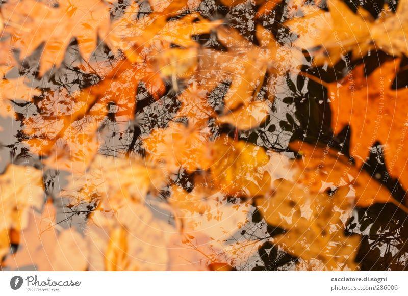 once we were at the top Natur Wasser Blatt Ferne dunkel schwarz kalt Traurigkeit Gefühle Herbst natürlich Tod Schwimmen & Baden orange nass Vergänglichkeit