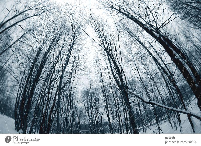 unheimlicher Wald Baum Winter Wald kalt Stimmung