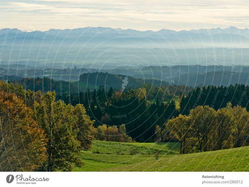 bis zu den Alpen Umwelt Natur Landschaft Pflanze Luft Himmel Wolken Horizont Herbst Wetter Schönes Wetter Baum Gras Sträucher Grünpflanze Wiese Feld Wald Hügel