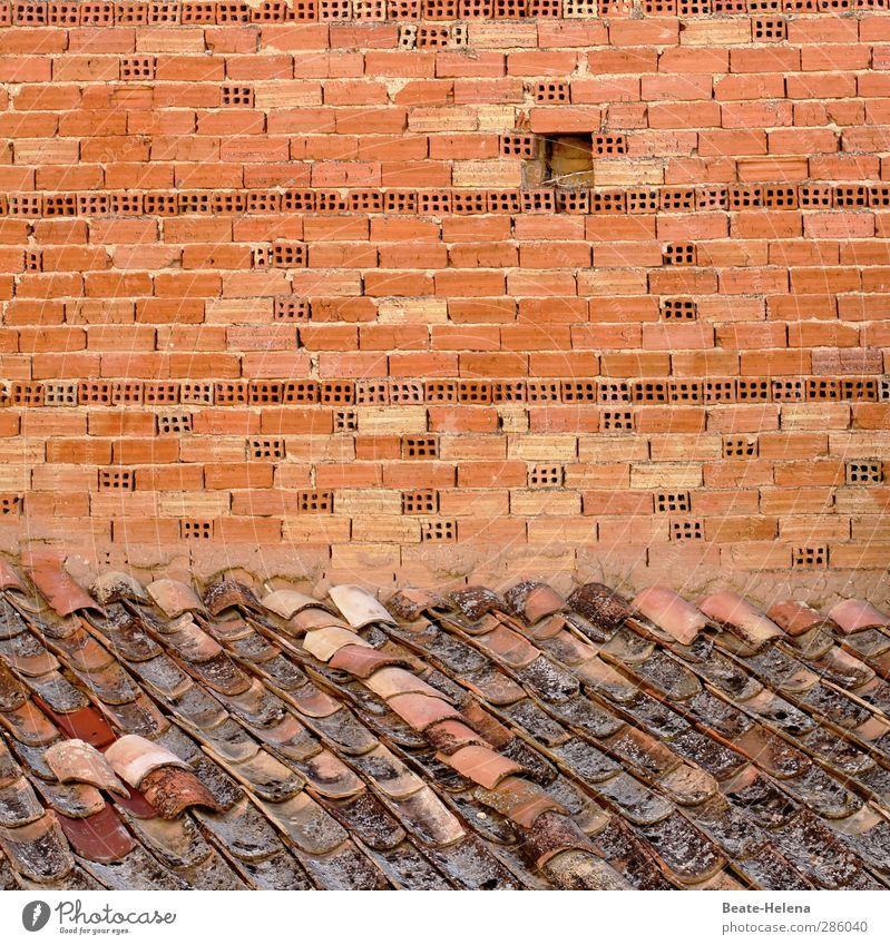 wenn eins zum andern kommt Häusliches Leben Haus Hausbau Handwerker Mauer Wand Dach Stein Arbeit & Erwerbstätigkeit bauen eckig Billig braun rot Kraft