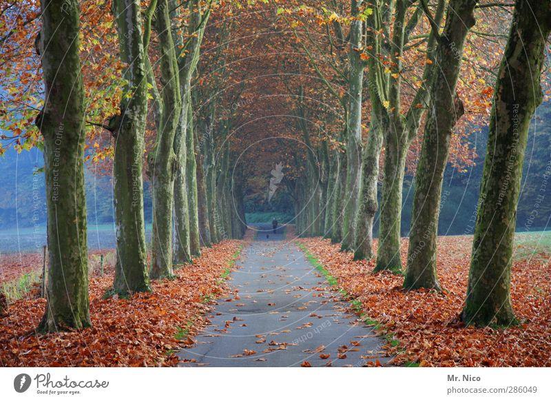 novembermorje Umwelt Natur Landschaft Herbst Klima Baum Blatt Park Wald Idylle Linde Allee Wege & Pfade Spaziergang Holz November Novemberstimmung Herbstfärbung