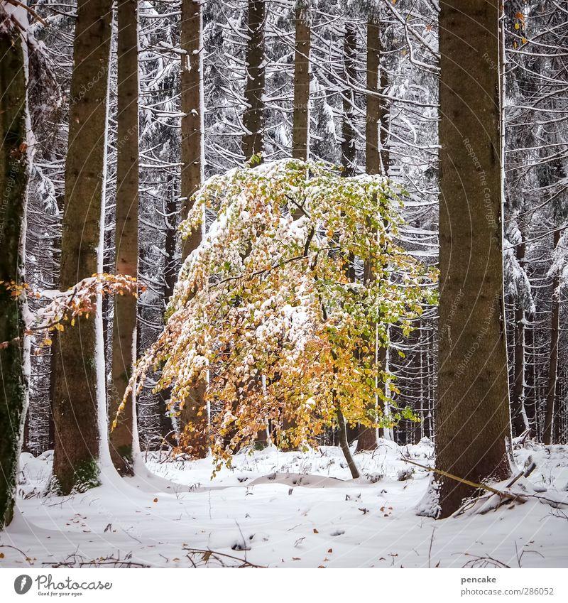 oktoberschnee Natur Baum Einsamkeit Blatt Winter Landschaft Wald Umwelt Herbst Schnee Wetter gold Klima eng Gewicht Schneelandschaft
